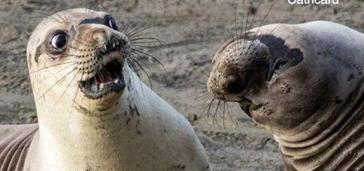 Выбрано самое смешное фото дикой природы 2017 года