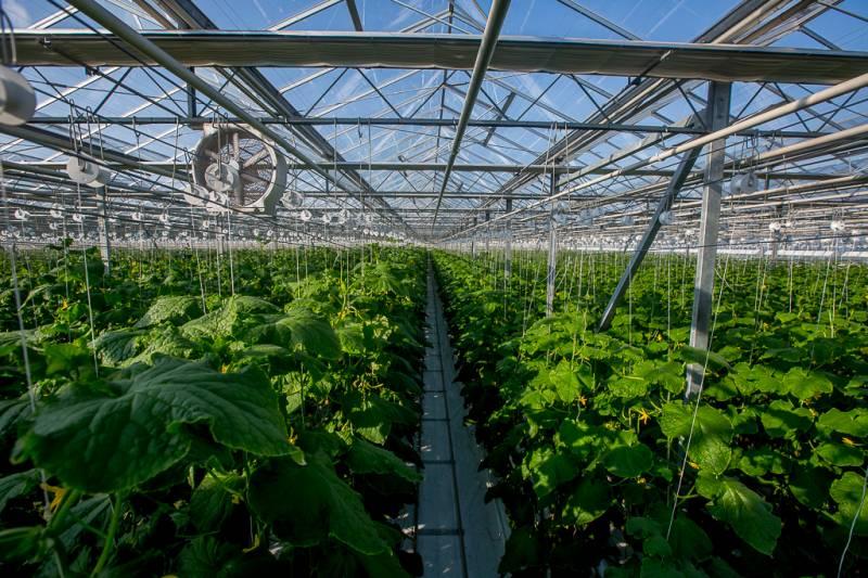 Импортозамещение в России: два слова о турецких помидорах, которые скоро будут никому не нужны