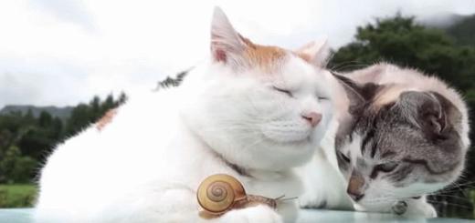Кошачий дуэт
